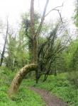 "Un arbre ""Remarquable"""
